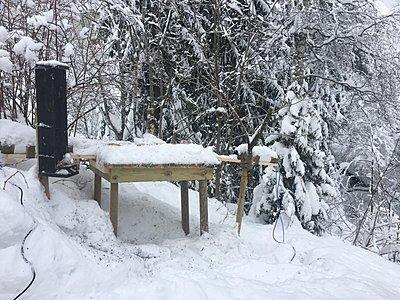 UWOL*45*-*Winter into the forest, by Per Johan Naesje-27744651_1157812514354060_820133029_o.jpg