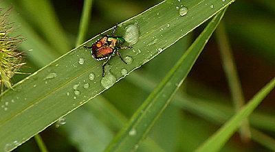 Tales of Wonder and Woe: UWOL #4-beetle.jpg