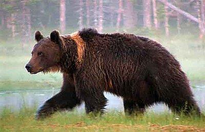 """UWOL#4 """"The Pond of Bears"""" by Per Johan Naesje-bear1.jpg"""
