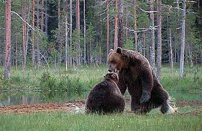"""UWOL#4 """"The Pond of Bears"""" by Per Johan Naesje-bear3.jpg"""