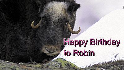 Happy Birthday, Robin-happybirthday_robin.jpg