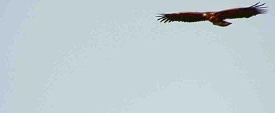 Tales of Wonder and Woe: UWOL #7-eagel-3.jpg