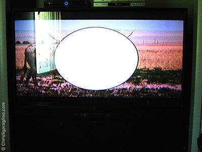 Bride is FAT on DVD!-image_pjpeg.jpg