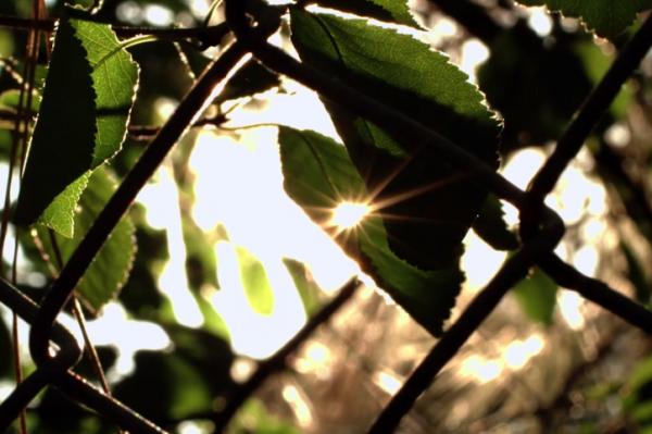 Screen Shot 2014-09-19 at 8.38.13 AM